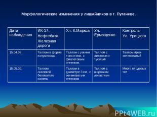 Морфологические изменения у лишайников в г. Пугачеве. Дата наблюдения ИК-17, Неф
