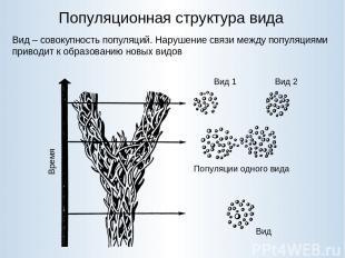 Популяционная структура вида Вид – совокупность популяций. Нарушение связи между