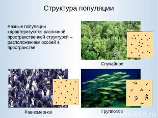 Структура популяции Случайное Равномерное Групповое Разные популяции характеризу