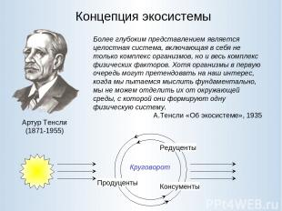 Концепция экосистемы Артур Тенсли (1871-1955) Более глубоким представлением явля