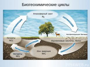 Биогеохимические циклы Нитриты
