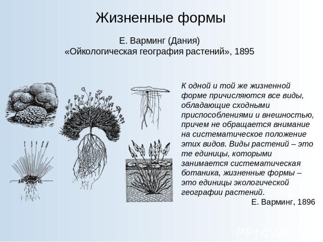 Жизненные формы Е. Варминг (Дания) «Ойкологическая география растений», 1895 К одной и той же жизненной форме причисляются все виды, обладающие сходными приспособлениями и внешностью, причем не обращается внимание на систематическое положение этих в…