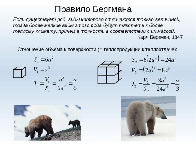 Правило Бергмана Если существует род, виды которого отличаются только величиной, тогда более мелкие виды этого рода будут тяготеть к более теплому климату, причем в точности в соответствии с их массой. Карл Бергман, 1847 Отношение объема к поверхнос…