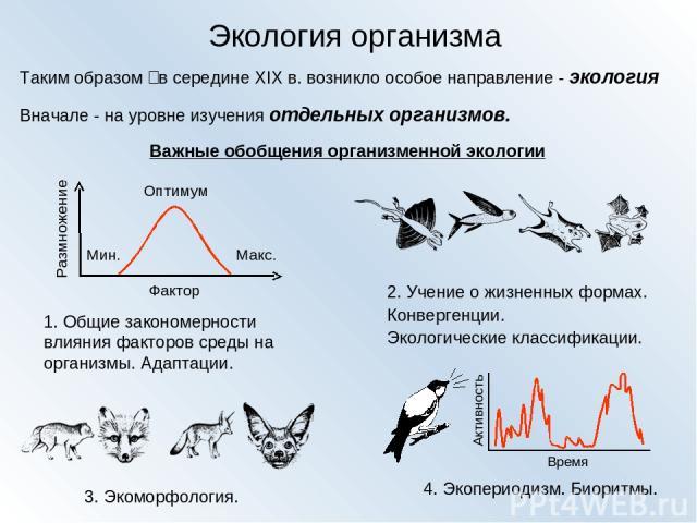 Экология организма Таким образом‑ в середине XIX в. возникло особое направление - экология Вначале - на уровне изучения отдельных организмов. Важные обобщения организменной экологии 1. Общие закономерности влияния факторов среды на организмы. Адапт…