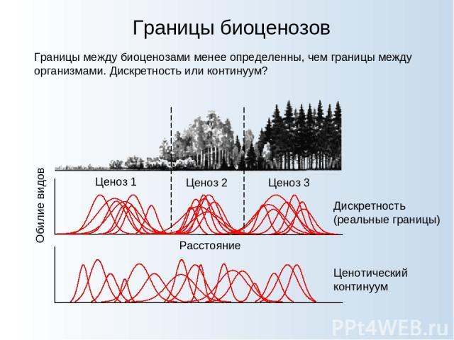 Границы биоценозов Границы между биоценозами менее определенны, чем границы между организмами. Дискретность или континуум? Расстояние Обилие видов Дискретность (реальные границы) Ценотический континуум