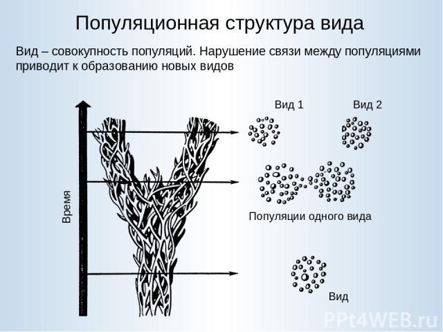 Популяционная структура вида Вид – совокупность популяций. Нарушение связи между популяциями приводит к образованию новых видов
