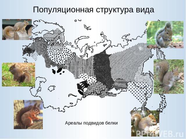 Популяционная структура вида Ареалы подвидов белки