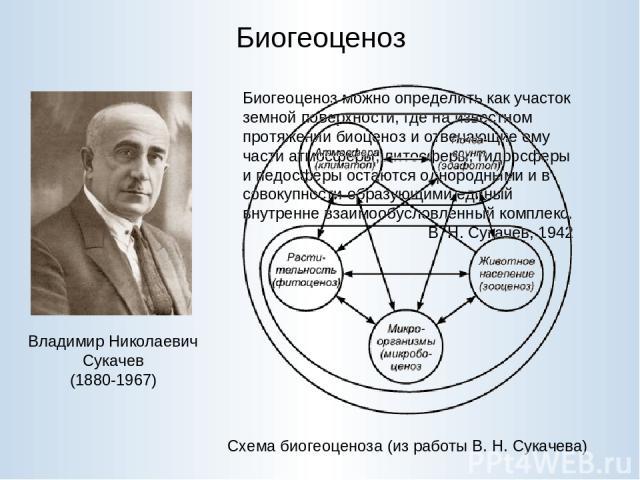 Биогеоценоз Владимир Николаевич Сукачев (1880-1967) Биогеоценоз можно определить как участок земной поверхности, где на известном протяжении биоценоз и отвечающие ему части атмосферы, литосферы, гидросферы и педосферы остаются однородными и в совоку…