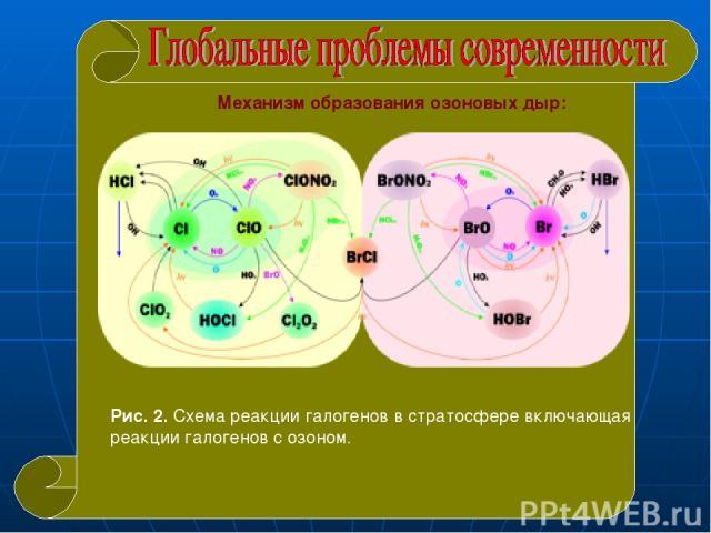Механизм образования озоновых дыр: Рис. 2. Схема реакции галогенов в стратосфере включающая реакции галогенов с озоном.
