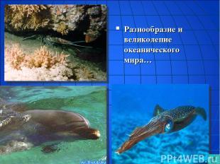 Разнообразие и великолепие океанического мира…