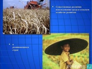 Существенные различия использования труда в сельском хозяйстве развитых и развив