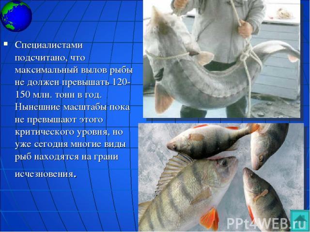 Специалистами подсчитано, что максимальный вылов рыбы не должен превышать 120-150 млн. тонн в год. Нынешние масштабы пока не превышают этого критического уровня, но уже сегодня многие виды рыб находятся на грани исчезновения.