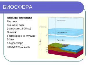БИОСФЕРА Границы биосферы Верхняя: озоновый слой (на высоте 16-25 км) Нижняя: в
