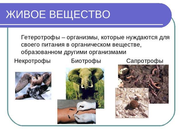 ЖИВОЕ ВЕЩЕСТВО Гетеротрофы – организмы, которые нуждаются для своего питания в органическом веществе, образованном другими организмами Некротрофы Биотрофы Сапротрофы