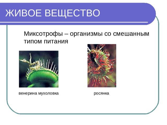 ЖИВОЕ ВЕЩЕСТВО Миксотрофы – организмы со смешанным типом питания венерина мухоловка росянка