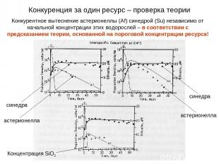Конкурентное вытеснение астерионеллы (Af) синедрой (Su) независимо от начальной