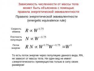 Правило энергетической эквивалентности (energetic equivalence rule) То есть пото