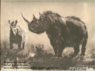Шерстистый носорог Автор: Зденек Буриан Источник: http://macroevolution.narod.ru
