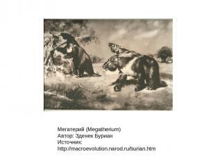 Мегатерий (Megatherium) Автор: Зденек Буриан Источник: http://macroevolution.nar