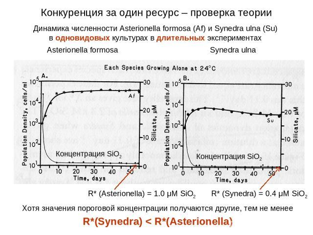 Динамика численности Asterionella formosa (Af) и Synedra ulna (Su) в одновидовых культурах в длительных экспериментах Asterionella formosa Synedra ulna Концентрация SiO2 R* (Asterionella) = 1.0 μM SiO2 R* (Synedra) = 0.4 μM SiO2 Концентрация SiO2 Хо…