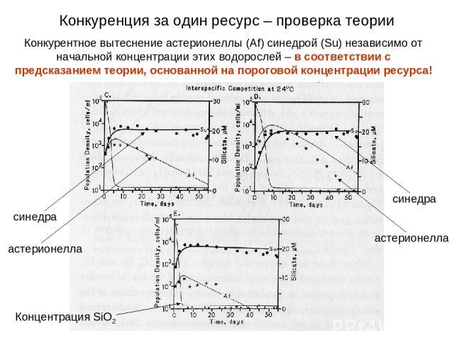 Конкурентное вытеснение астерионеллы (Af) синедрой (Su) независимо от начальной концентрации этих водорослей – в соответствии с предсказанием теории, основанной на пороговой концентрации ресурса! синедра астерионелла Концентрация SiO2 синедра астери…