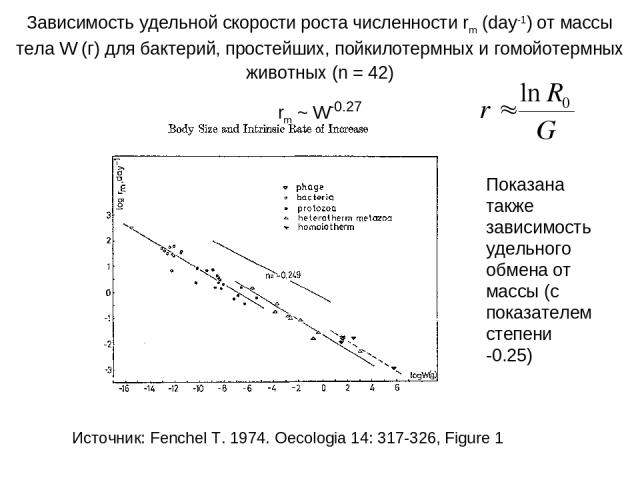 Зависимость удельной скорости роста численности rm (day-1) от массы тела W (г) для бактерий, простейших, пойкилотермных и гомойотермных животных (n = 42) rm ~ W-0.27 Показана также зависимость удельного обмена от массы (с показателем степени -0.25) …