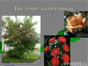 Цветочно-декоративная Клен татарский