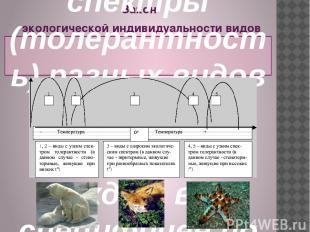 Закон экологической индивидуальности видов был сформулирован в 1924 г. русским б
