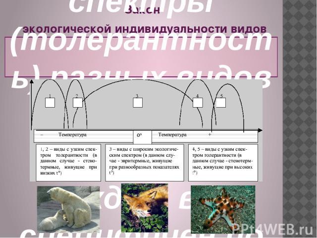 Закон экологической индивидуальности видов был сформулирован в 1924 г. русским ботаником Л.Г. Раменским: экологические спектры (толерантность) разных видов не совпадает, каждый вид специфичен по своим экологическим возможностям.
