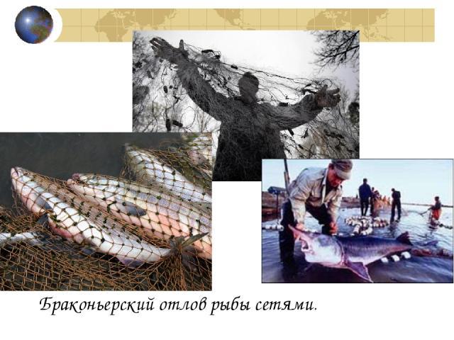 Браконьерский отлов рыбы сетями.