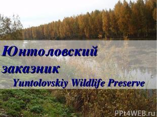 Юнтоловский заказник Yuntolovskiy Wildlife Preserve