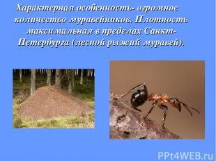 Характерная особенность- огромное количество муравейников. Плотность максимальна