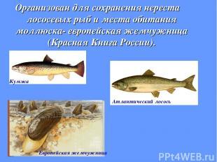 Организован для сохранения нереста лососевых рыб и места обитания моллюска- евро