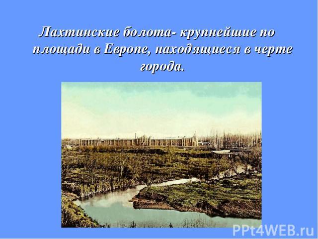 Лахтинские болота- крупнейшие по площади в Европе, находящиеся в черте города.