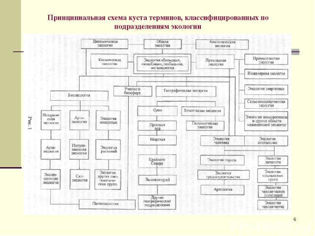 * Принципиальная схема куста терминов, классифицированных по подразделениям экологии