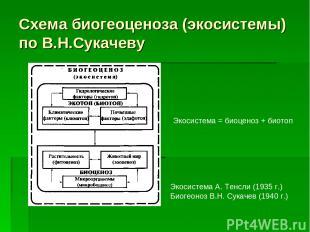 Схема биогеоценоза (экосистемы) по В.Н.Сукачеву Экосистема А. Тенсли (1935 г.) Б