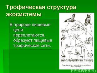 Трофическая структура экосистемы В природе пищевые цепи переплетаются, образуют