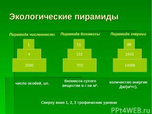 Экологические пирамиды 2000 4 1 703 132 11 14098 1603 88 Пирамида численности Пи