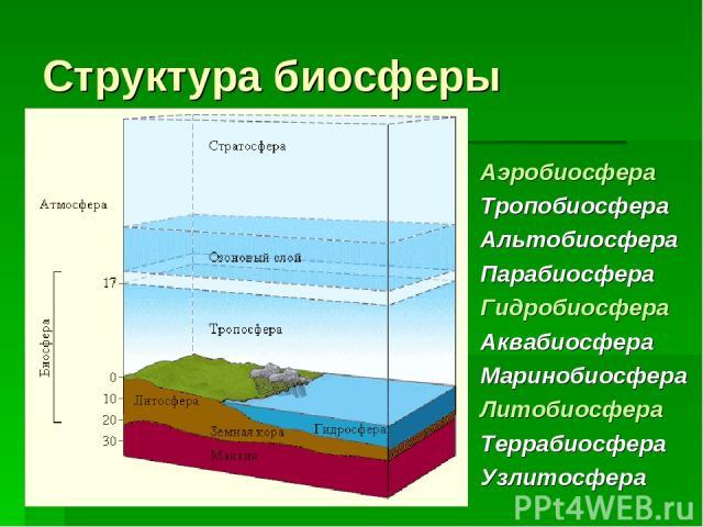 Структура биосферы Аэробиосфера Тропобиосфера Альтобиосфера Парабиосфера Гидробиосфера Аквабиосфера Маринобиосфера Литобиосфера Террабиосфера Узлитосфера