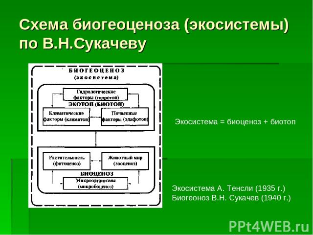 Схема биогеоценоза (экосистемы) по В.Н.Сукачеву Экосистема А. Тенсли (1935 г.) Биогеоноз В.Н. Сукачев (1940 г.) Экосистема = биоценоз + биотоп
