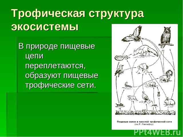 Трофическая структура экосистемы В природе пищевые цепи переплетаются, образуют пищевые трофические сети.