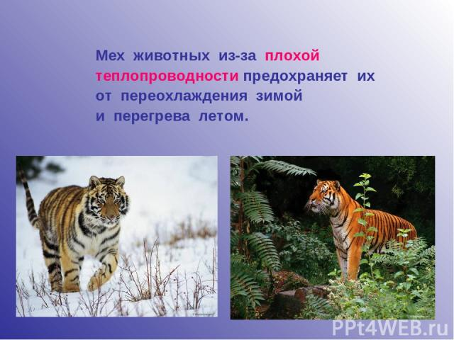 Мех животных из-за плохой теплопроводности предохраняет их от переохлаждения зимой и перегрева летом.