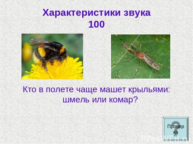 Характеристики звука 100 Кто в полете чаще машет крыльями: шмель или комар? Проверка