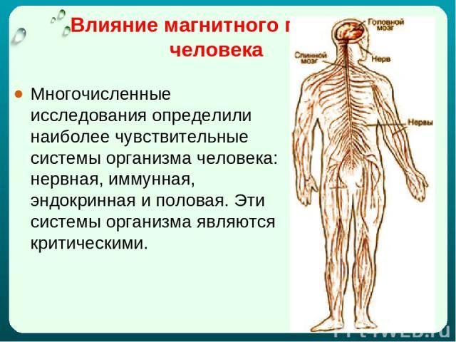 Влияние магнитного поля на человека Многочисленные исследования определили наиболее чувствительные системы организма человека: нервная, иммунная, эндокринная и половая. Эти системы организма являются критическими.