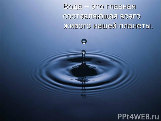 Вода – это главная составляющая всего живого нашей планеты.