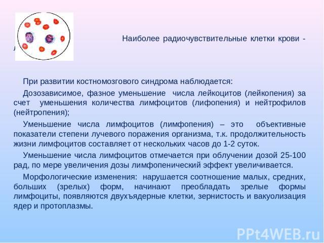 Наиболее радиочувствительные клетки крови - лейкоциты. При развитии костномозгового синдрома наблюдается: Дозозависимое, фазное уменьшение числа лейкоцитов (лейкопения) за счет уменьшения количества лимфоцитов (лифопения) и нейтрофилов (нейтропения)…