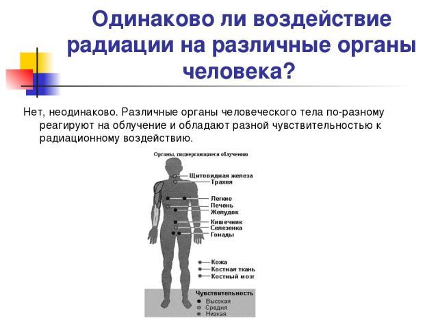 Одинаково ли воздействие радиации на различные органы человека? Нет, неодинаково. Различные органы человеческого тела по-разному реагируют на облучение и обладают разной чувствительностью к радиационному воздействию.