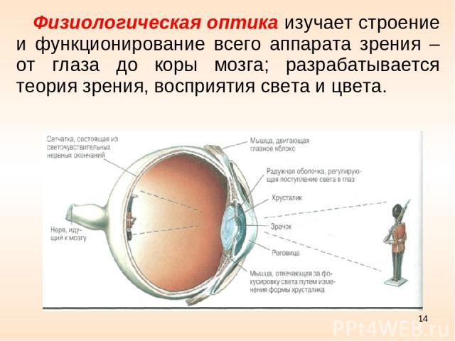 * Физиологическая оптика изучает строение и функционирование всего аппарата зрения – от глаза до коры мозга; разрабатывается теория зрения, восприятия света и цвета.