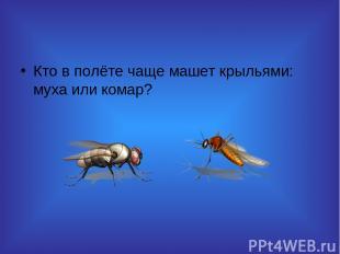 Кто в полёте чаще машет крыльями: муха или комар?