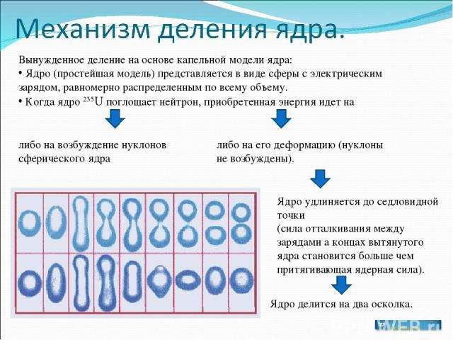 Вынужденное деление на основе капельной модели ядра: Ядро (простейшая модель) представляется в виде сферы с электрическим зарядом, равномерно распределенным по всему объему. Когда ядро 235U поглощает нейтрон, приобретенная энергия идет на либо на во…